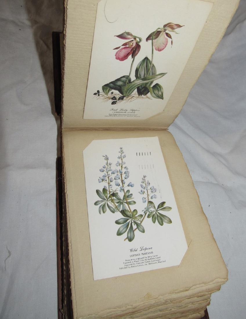 Postcard Album w/ 77 Flower Postcards - 4