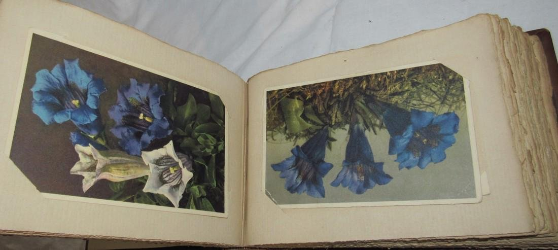 Postcard Album w/ 77 Flower Postcards - 5