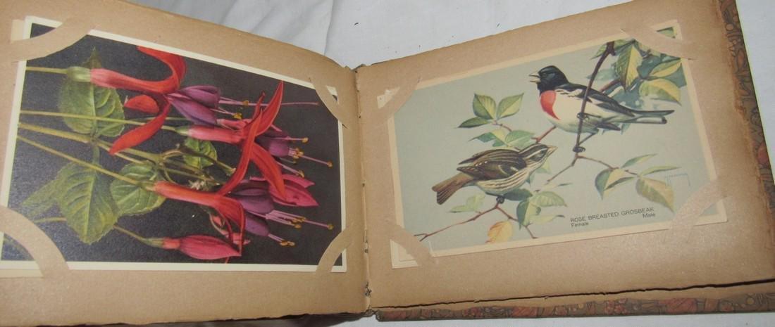 Postage Card Album w/ 99 Flower and Bird Postcards - 2