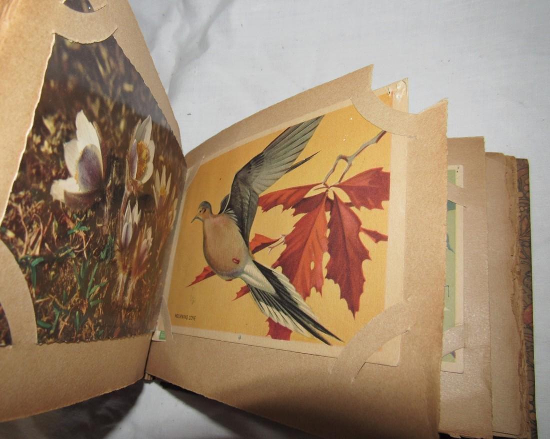 Postage Card Album w/ 99 Flower and Bird Postcards - 4