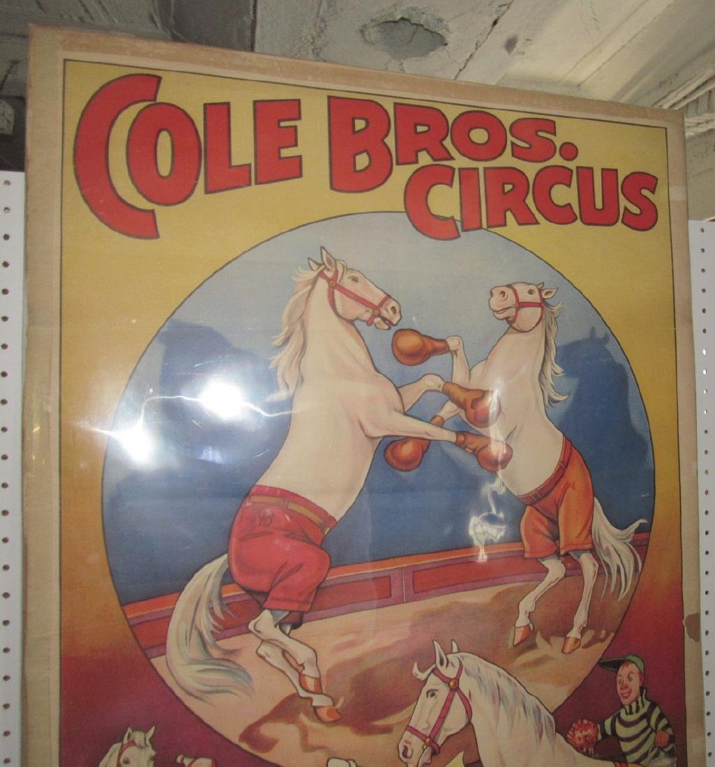 Cole Bro Circus Boxing Horse Poster - 5