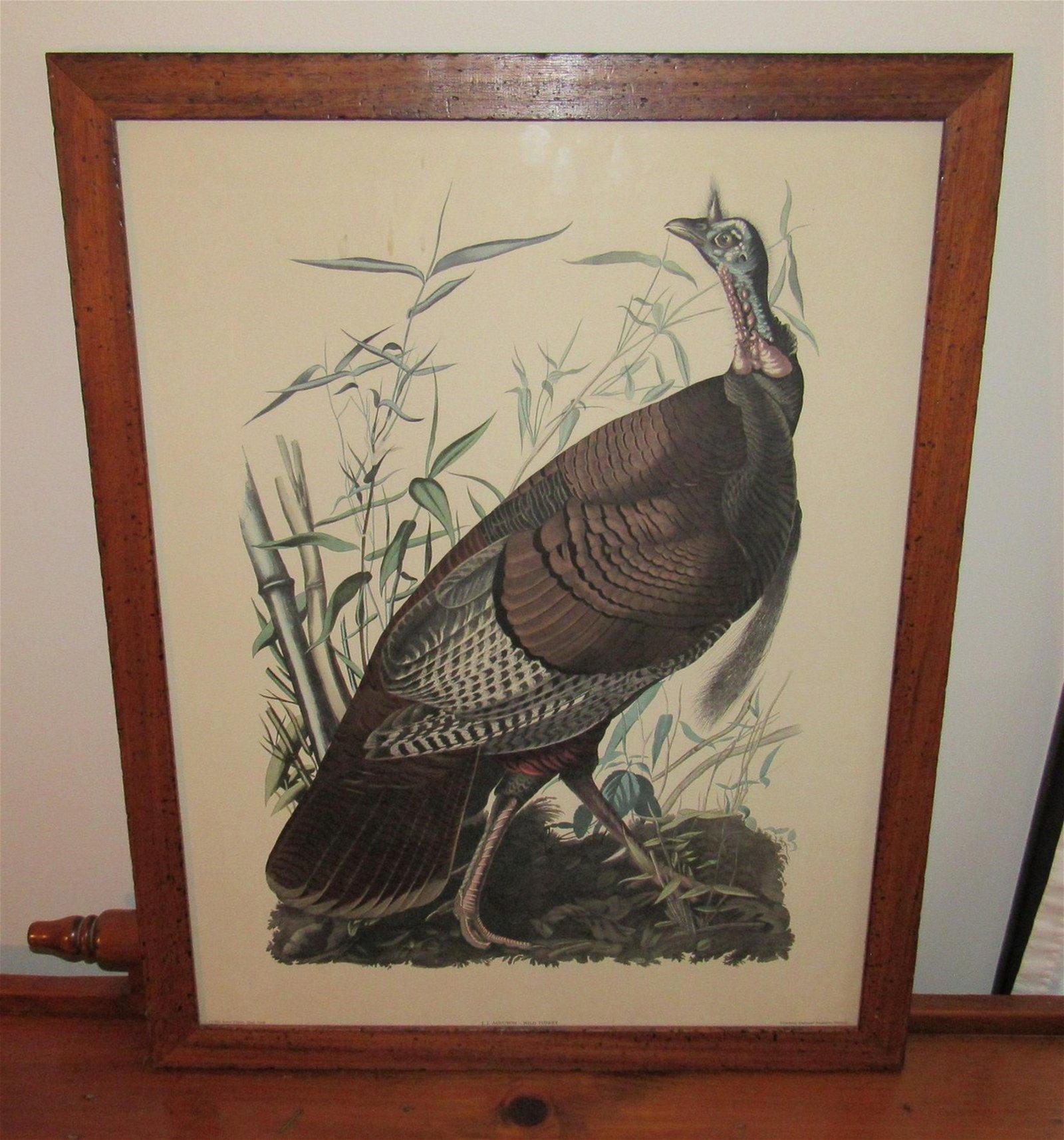 JJ Audubon Wild Turkey Print