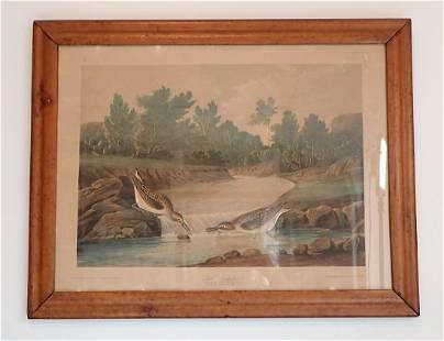 1860 Little Sandpiper JJ Audubon Litho