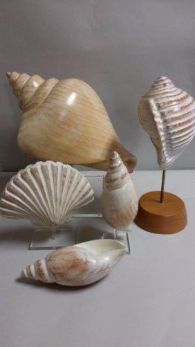 5 Wooden Designer Shells
