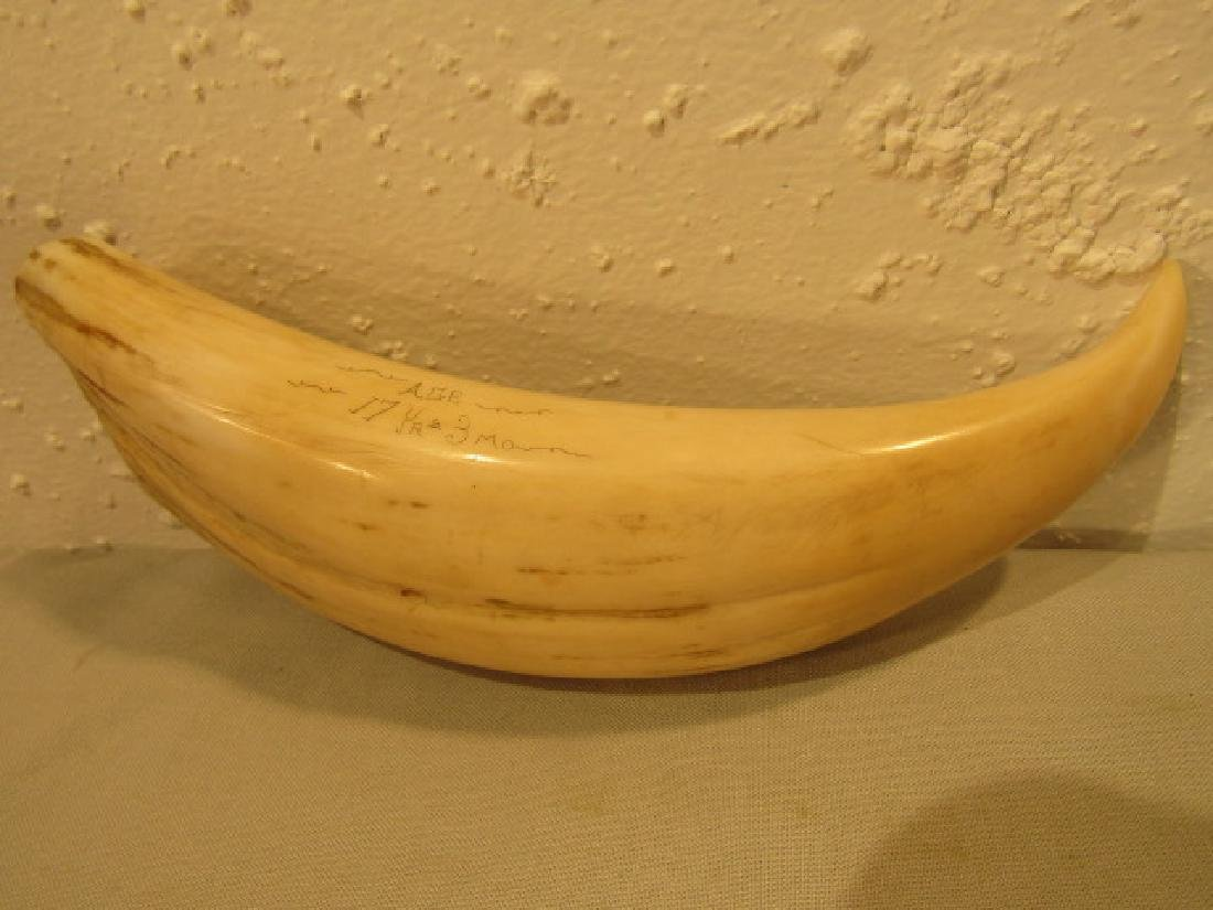 1857 WHALE TOOTH JENNY AYERS - 3
