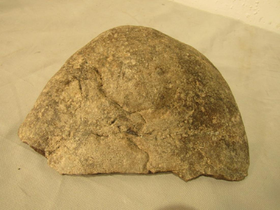 FOSSILIZED WHALE BRAIN