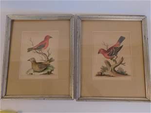 PAIR 18TH C. BIRD PRINTS