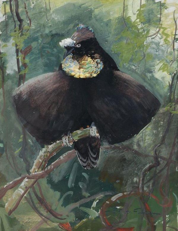 """16: Ottmar von Fuehrer """"Exotic bird"""". No date."""