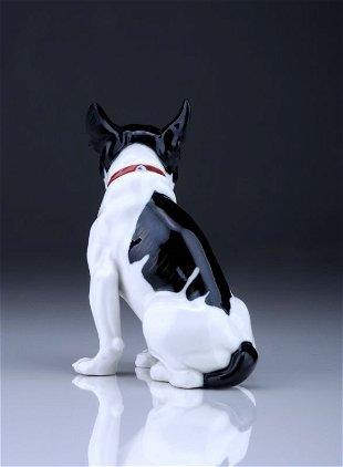 zwergbulldogge