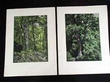 Franz Hein / Rare Complete Set of 8 Nature Woodcuts