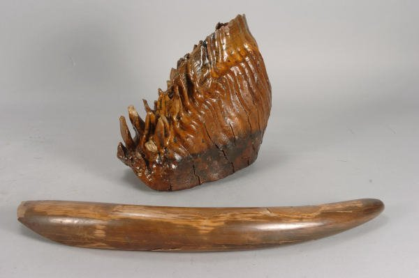 17: Prehistoric Mammoth Tusk and Upper Tooth