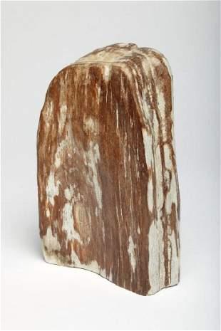 Petrified Wood Fossil Specimen