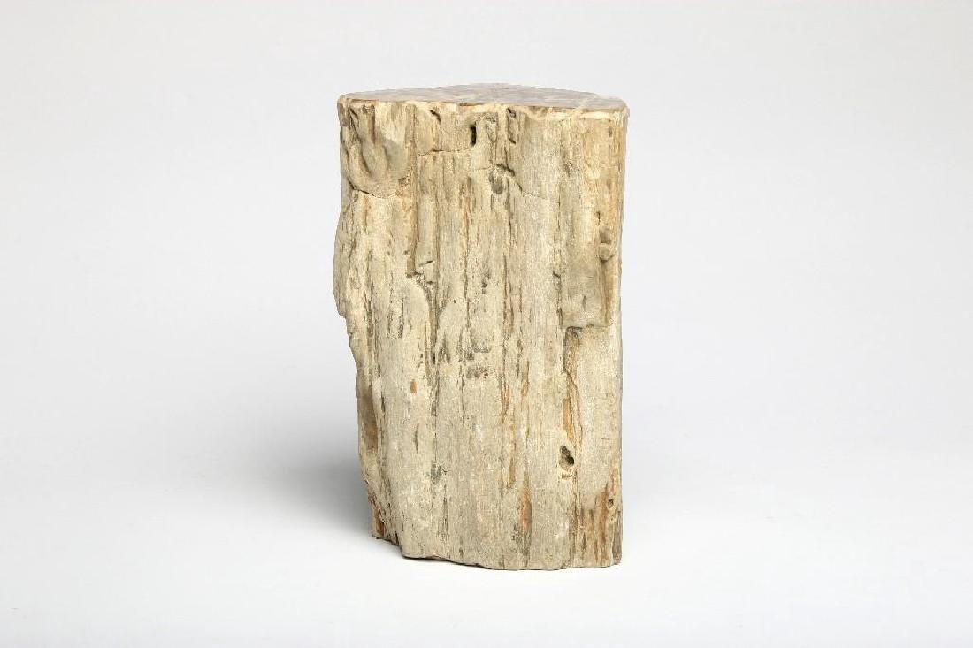 Large Petrified Wood Specimen