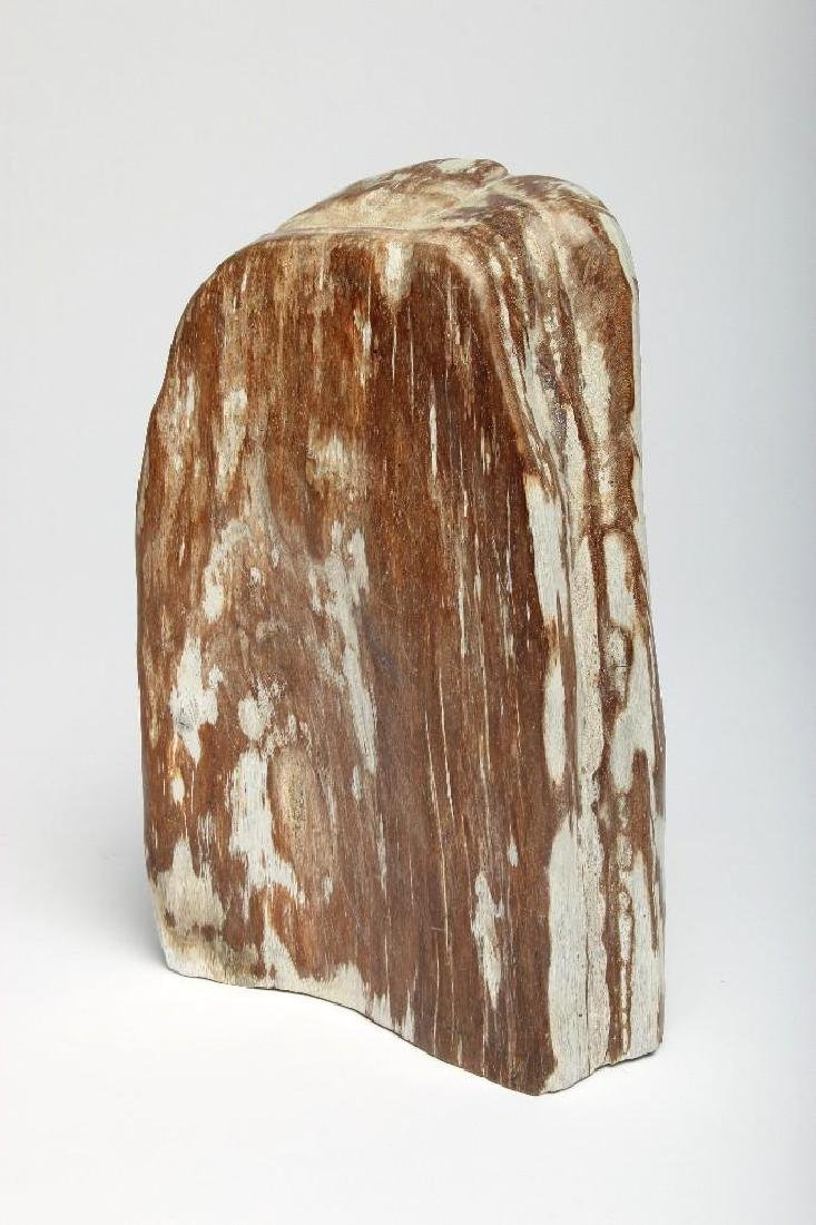 Petrified Wood Fossil Specimen