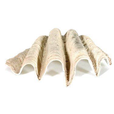 Large Sea Shell Style D_cor          FREE SHIPPING