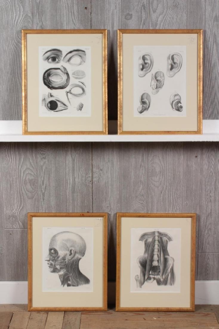 4 Antique 19th C Philadelphia Anatomy Prints