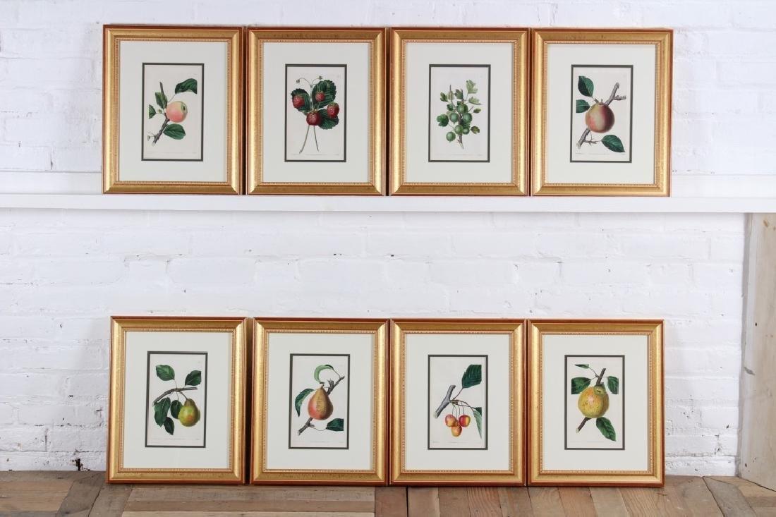 8 Antique 19th C John Lindley Botanical Prints