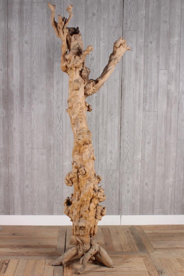 Burl Wood Root