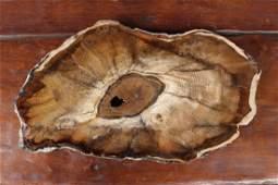 Polished Petrified Wood Slab Specimen