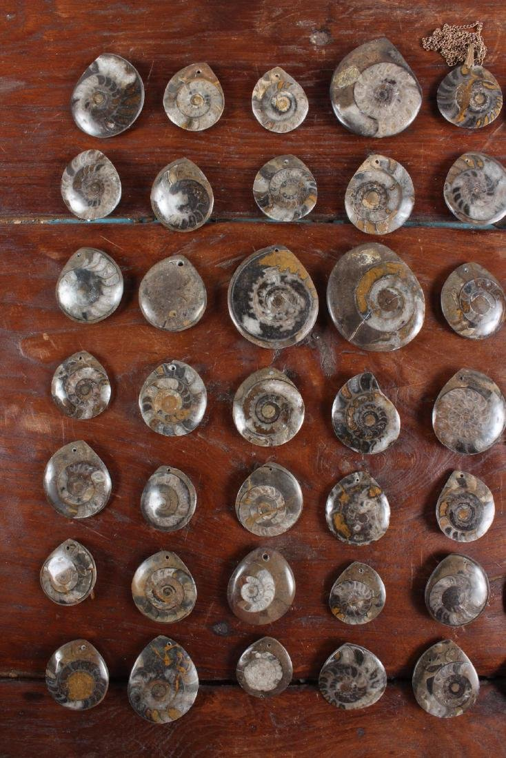 Polished Fossil Ammonite Lavaliere Stones - 2