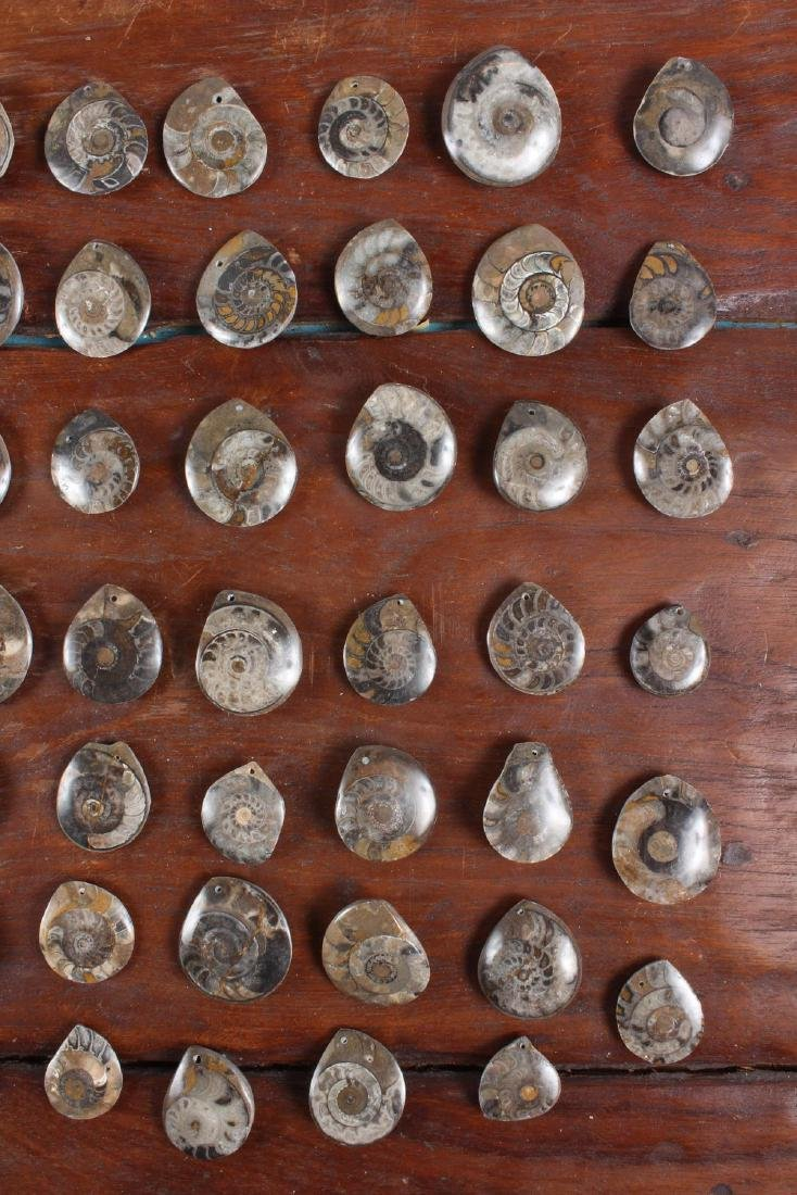 Polished Fossil Ammonite Lavaliere Stones - 4