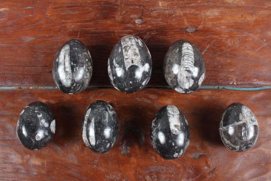 7 Polished Egg Form Fossil Stones