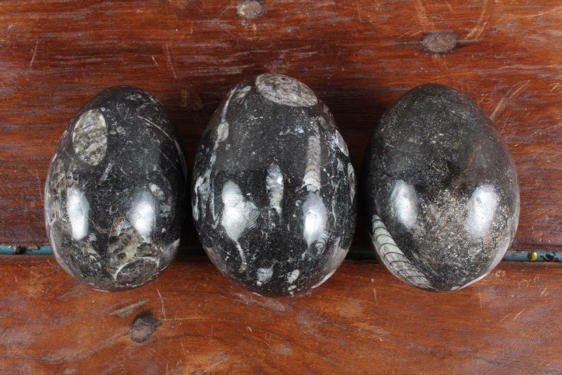 7 Polished Egg Form Fossil Stones - 2