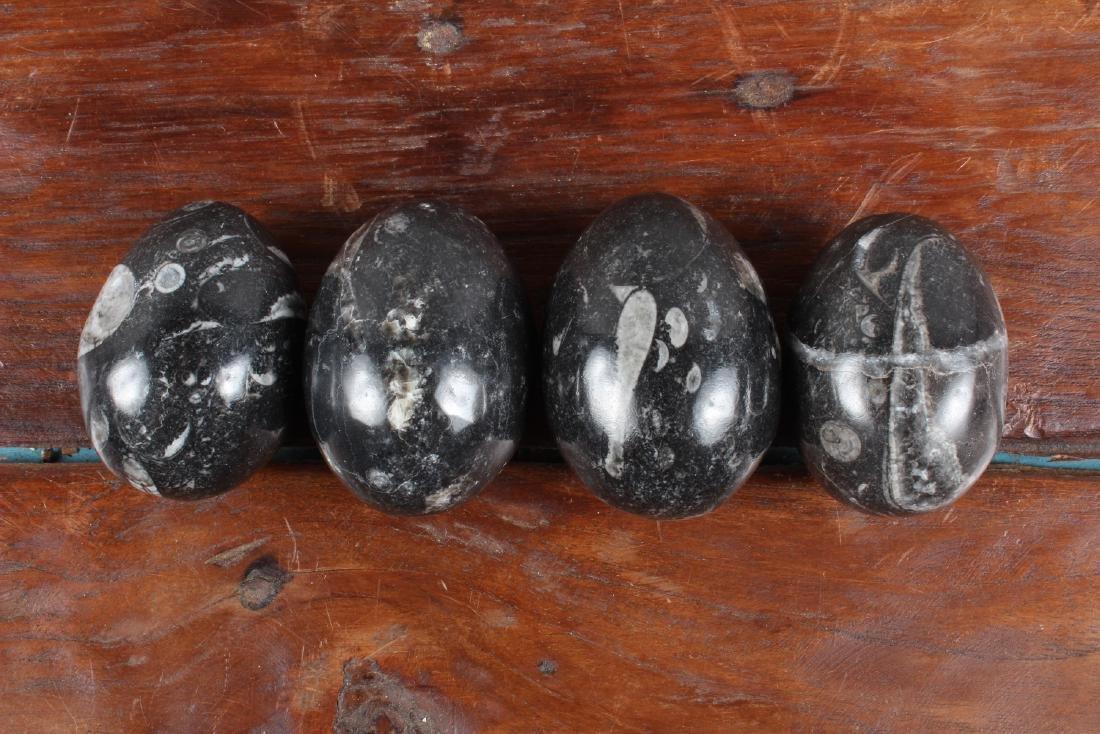 7 Polished Egg Form Fossil Stones - 3