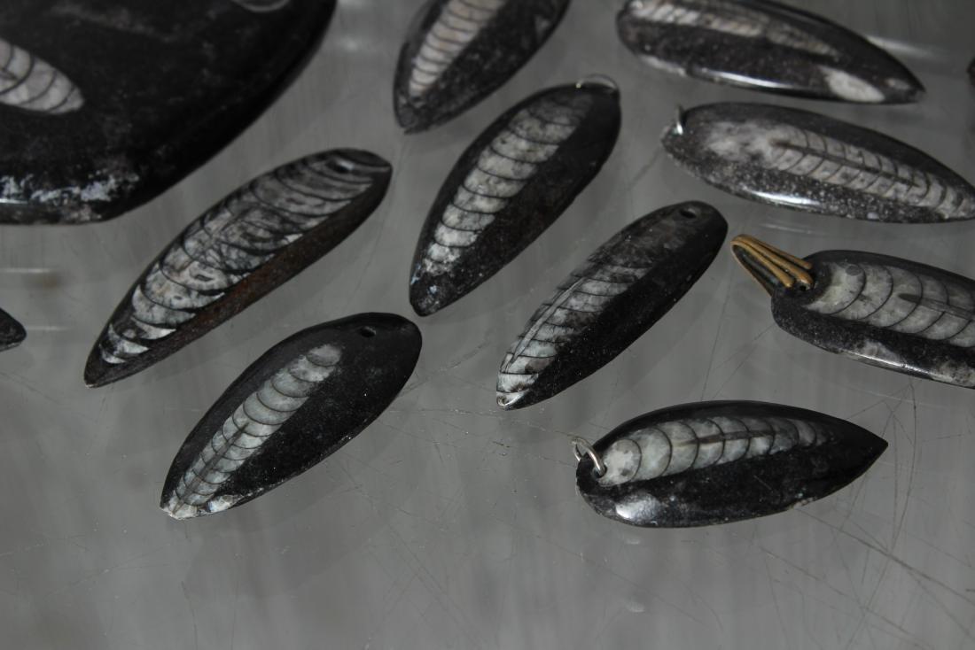 Lot of Polished Orthoceras Fossils - 3