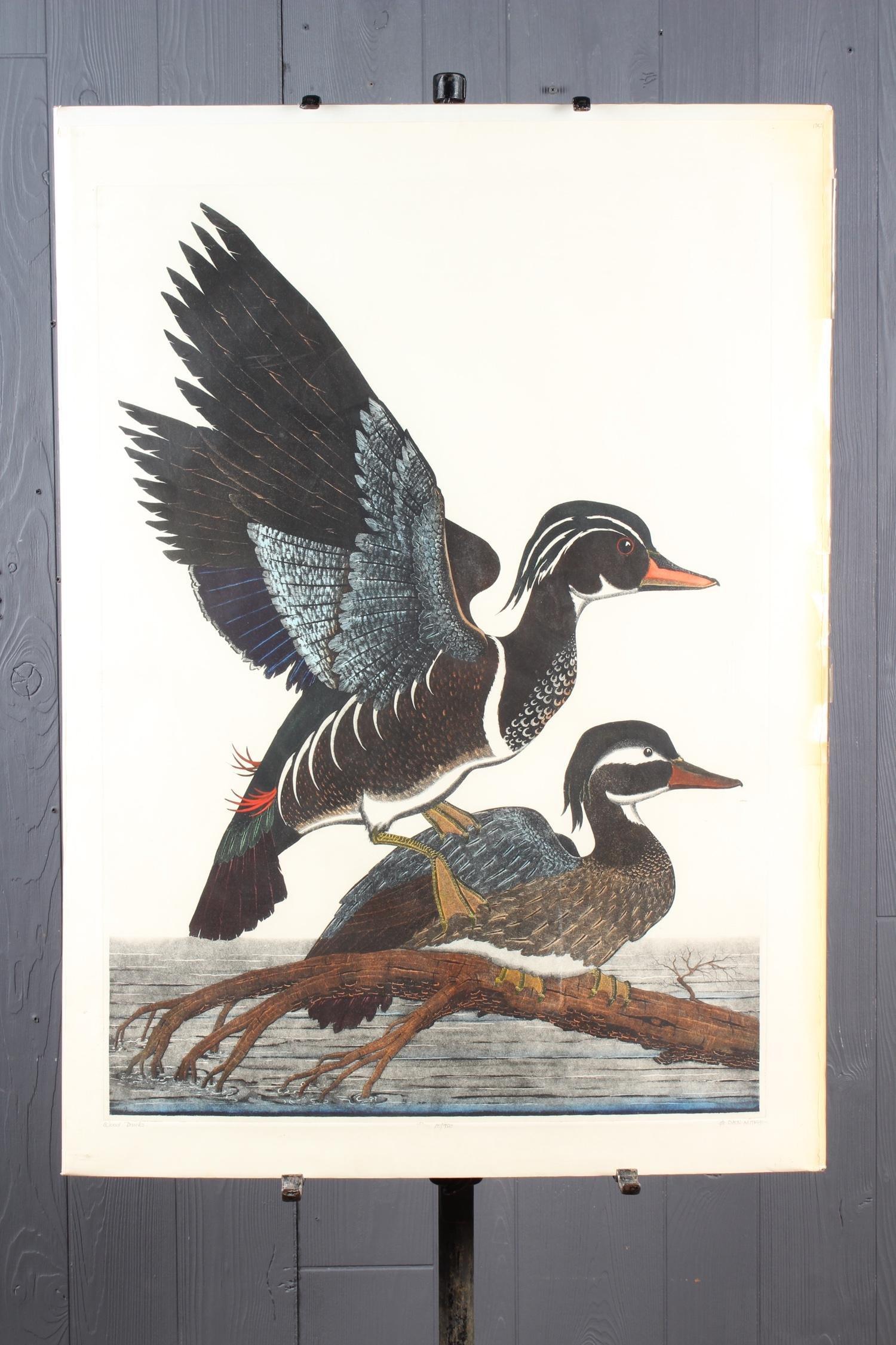 Wood Ducks by Dan Mitra