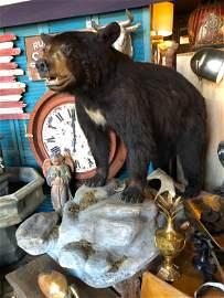 Full Body Taxidermy Black Bear