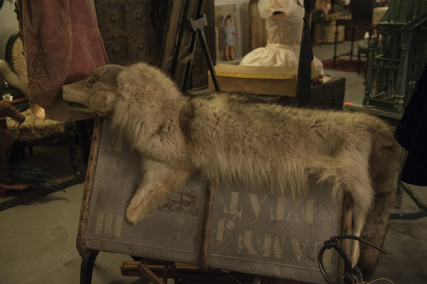 Taxidermy wolf carpet or rug