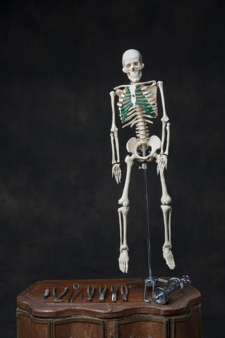 Skeleton from medical school Belgium
