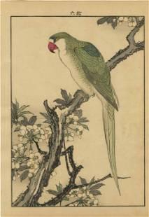 Imao Keinen - Parrott on Plum 1891 woodblock