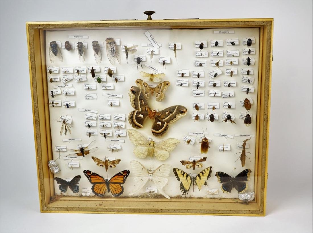 PA ENTOMOLOGY TAXIDERMY SHADOW BOX