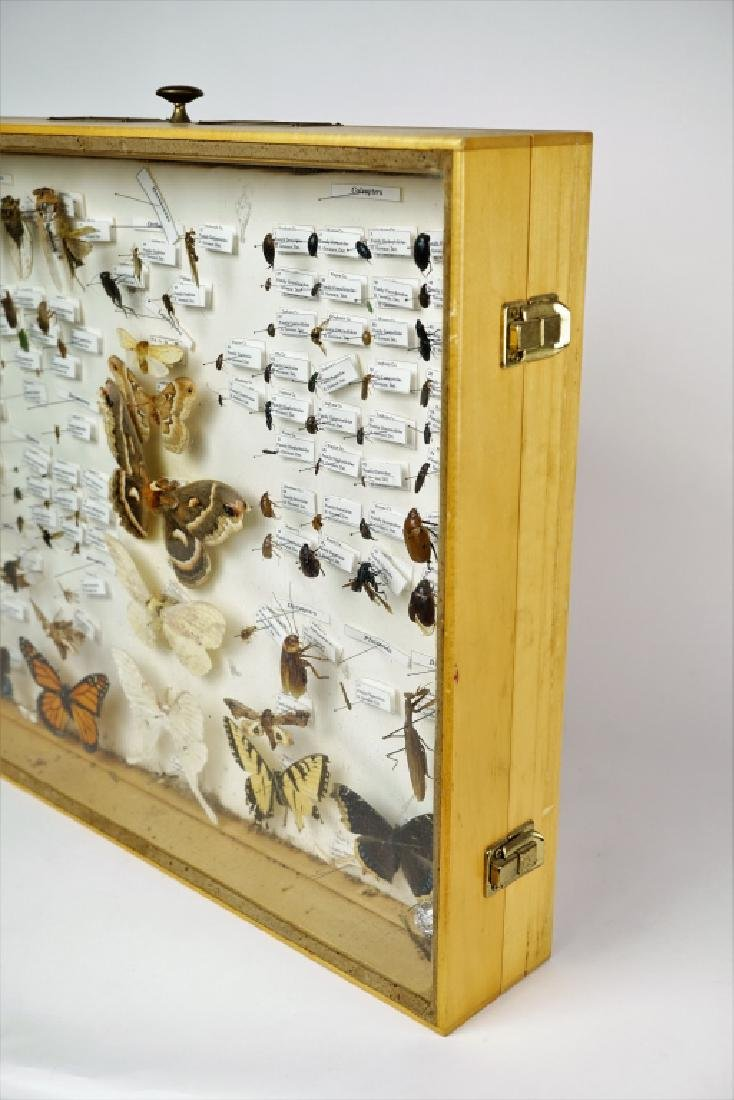 PA ENTOMOLOGY TAXIDERMY SHADOW BOX - 4