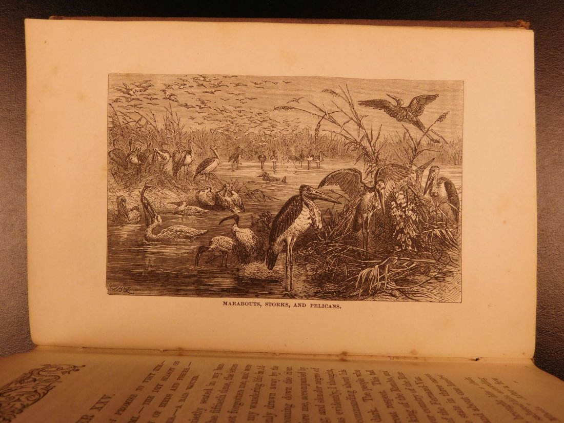 1869 Gorilla Country Chauillu Zoology Africa Illustrate - 7