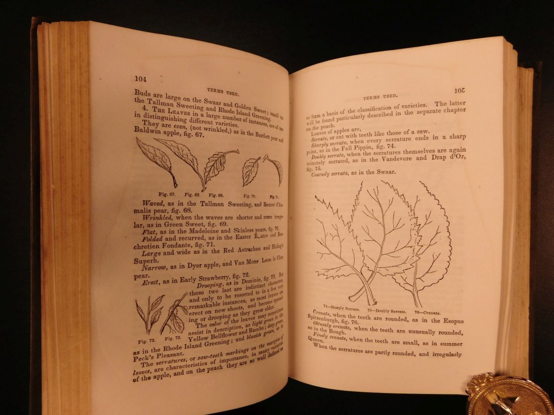 1851 American Wines Fruit Culturist Horticulture Botany - 4