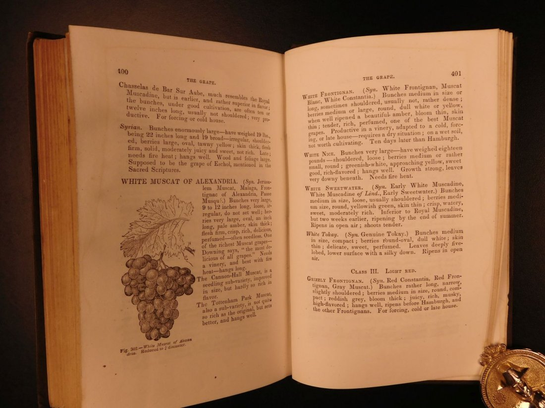 1851 American Wines Fruit Culturist Horticulture Botany - 8