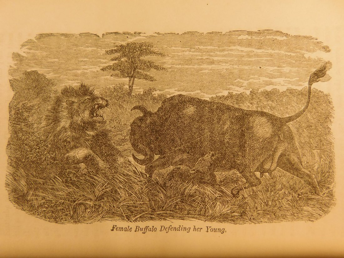 1872 David Livingstone South AFRICA Missionary Voyage - 8