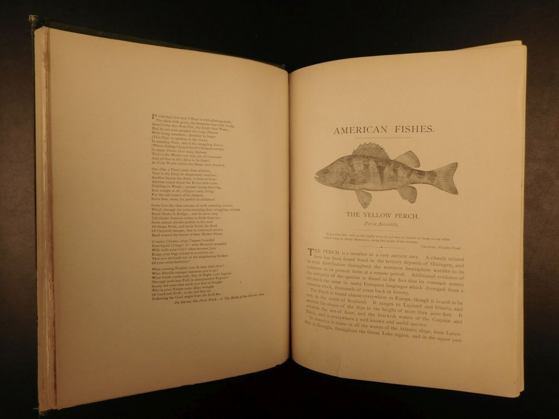 1888 1ed FISHING American Fishes by Goode Illustrated - 6