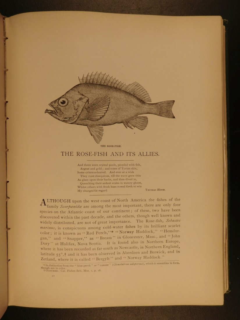 1888 1ed FISHING American Fishes by Goode Illustrated - 9