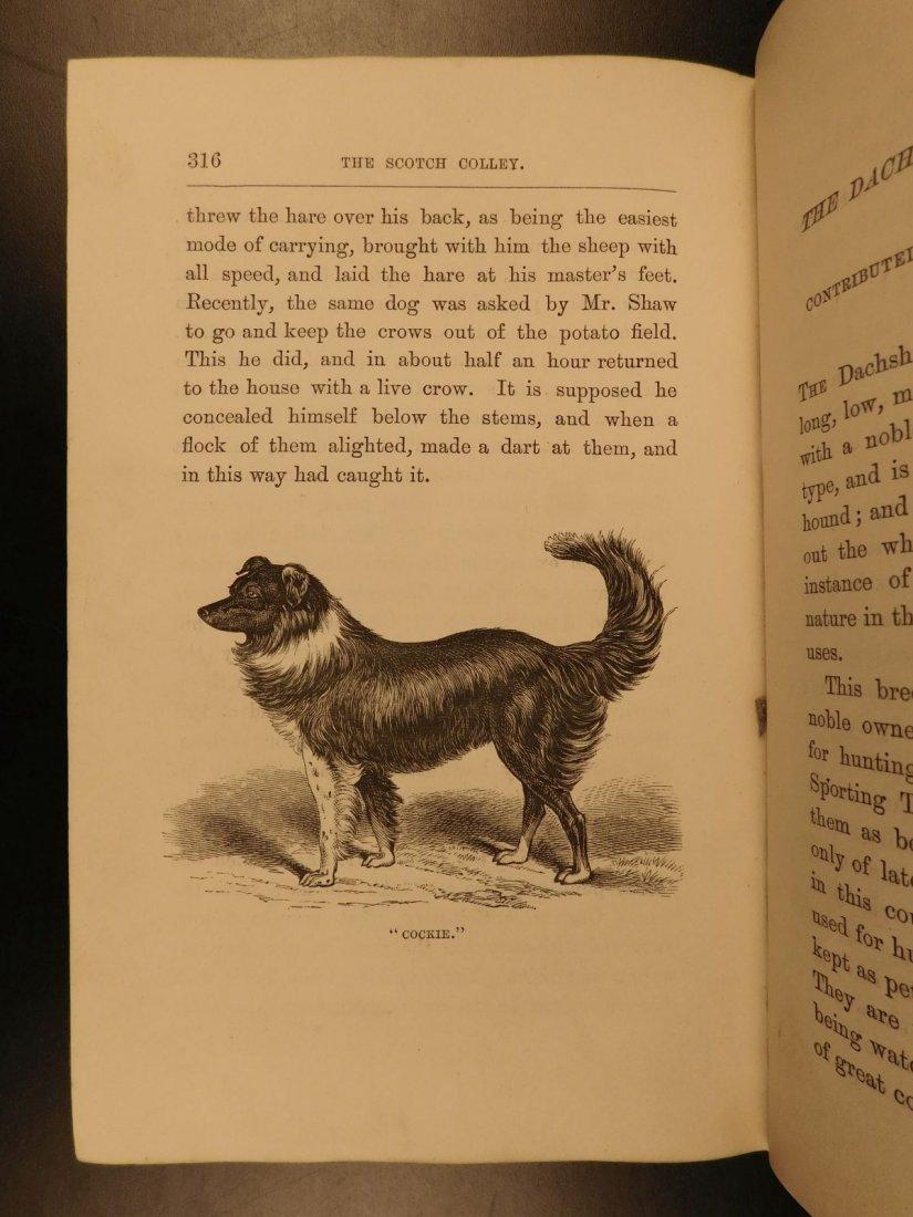 1873 DOGS Dog Shows Breeding Illustrated Animals - 10