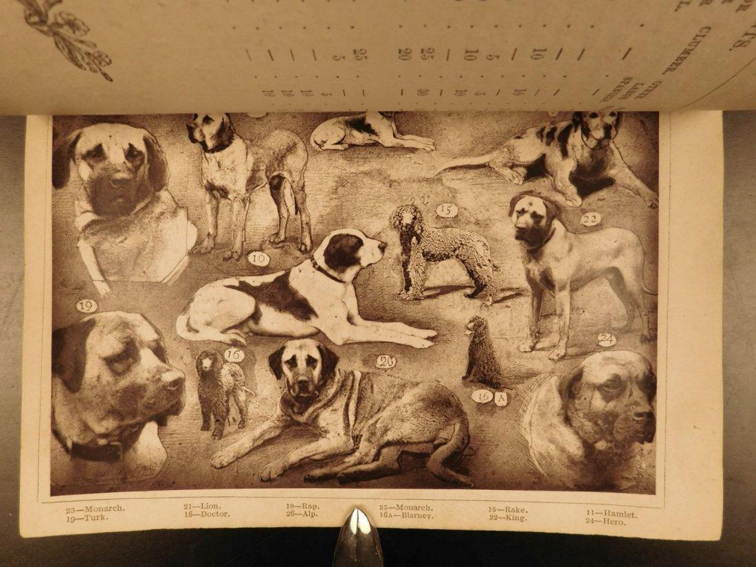 1873 DOGS Dog Shows Breeding Illustrated Animals - 4
