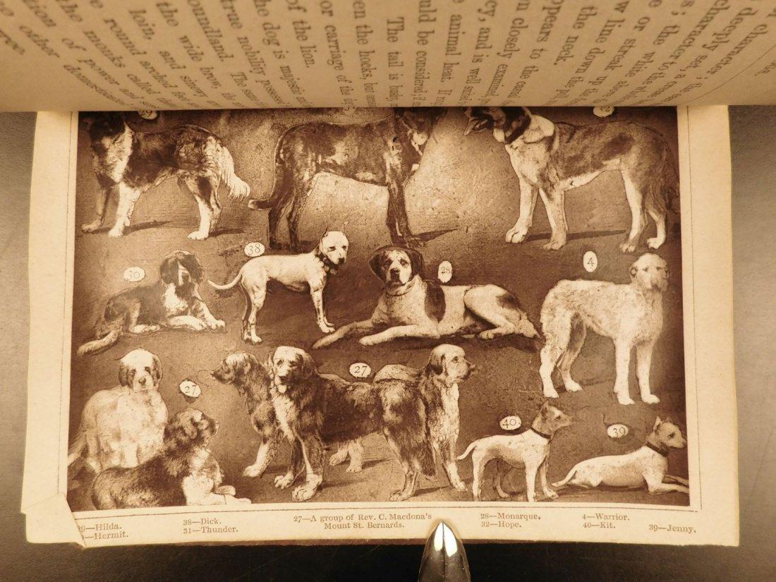 1873 DOGS Dog Shows Breeding Illustrated Animals - 5