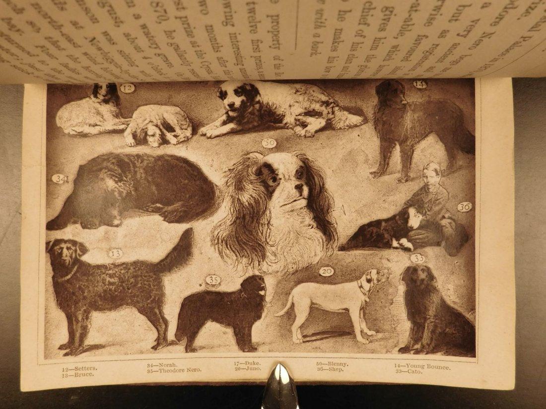 1873 DOGS Dog Shows Breeding Illustrated Animals - 6