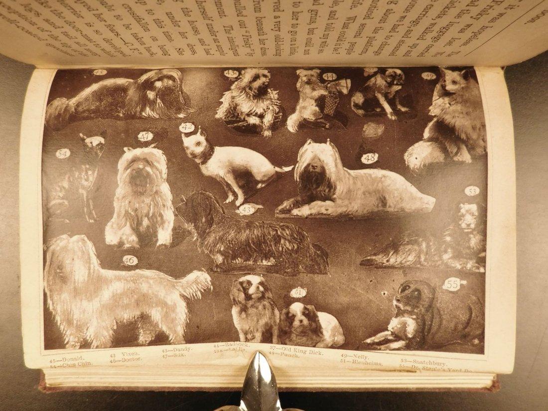 1873 DOGS Dog Shows Breeding Illustrated Animals - 7