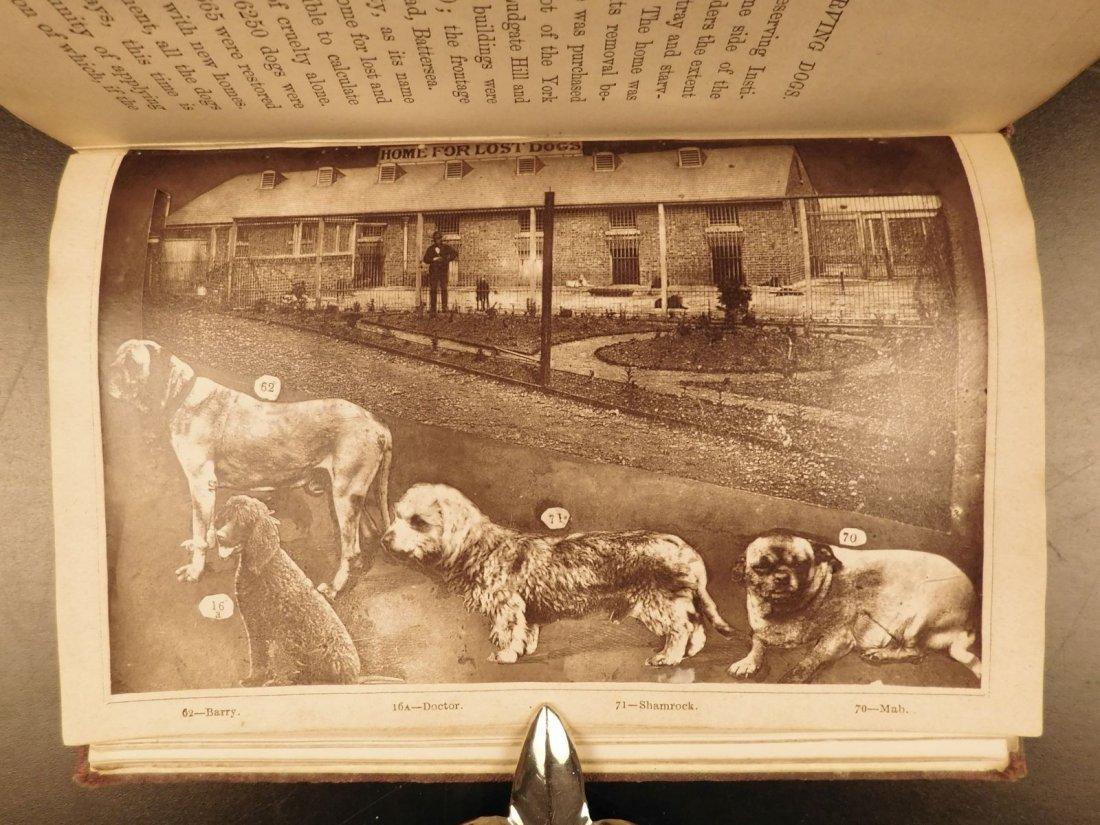 1873 DOGS Dog Shows Breeding Illustrated Animals - 8