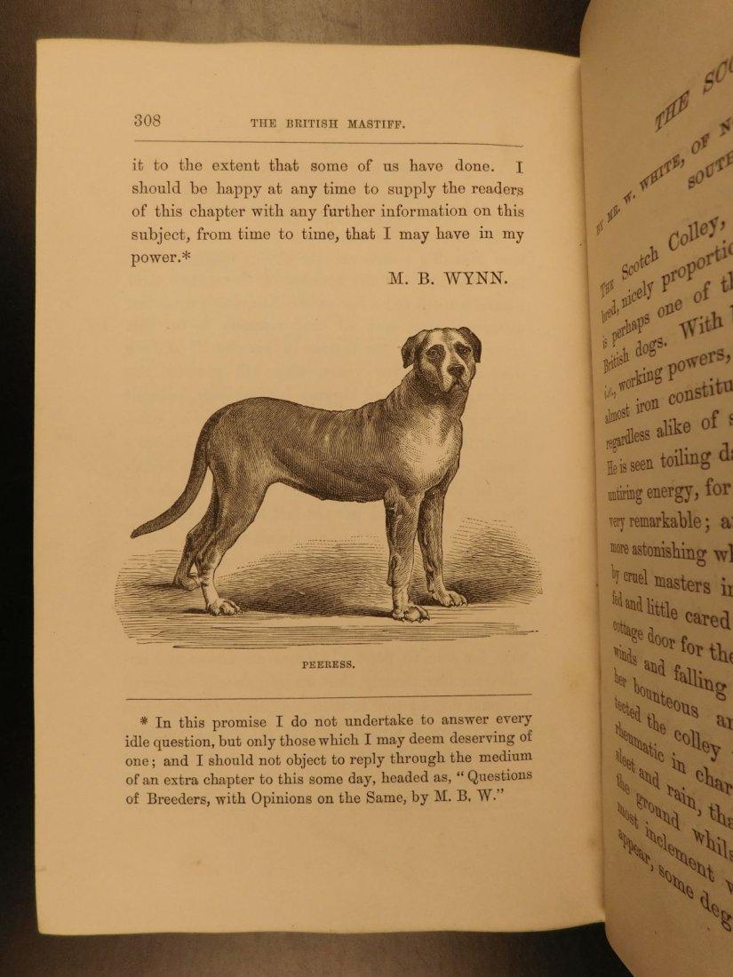 1873 DOGS Dog Shows Breeding Illustrated Animals - 9
