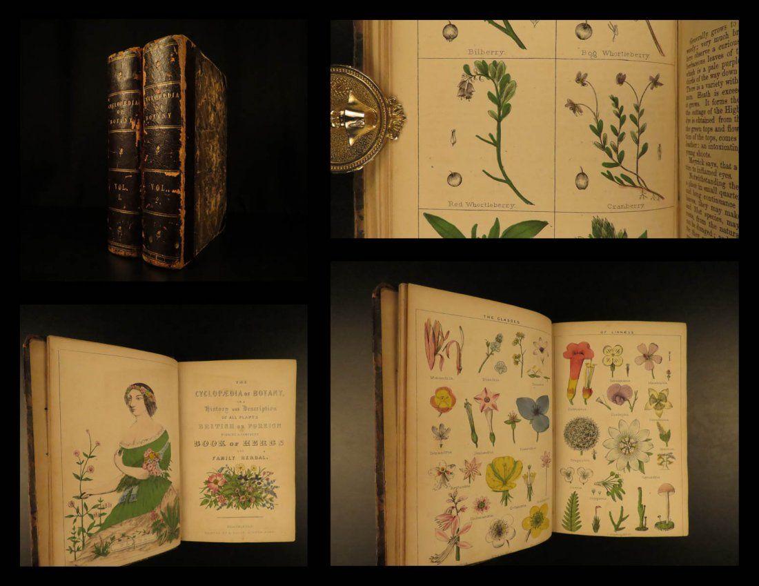 1854 Cyclopaedia of Botany Herbs Flora Herbal Flowers